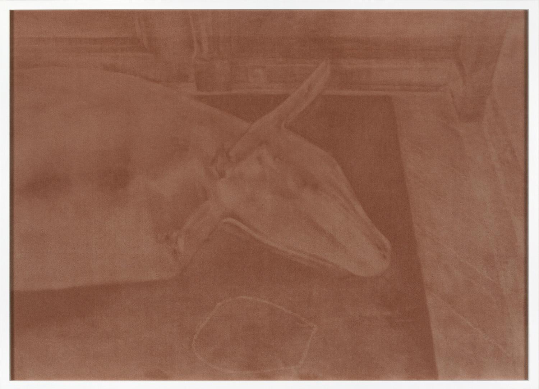 Tobias Hantmann, Ewald Mataré liegende Kuh, Velours Teppich, Holzrahmen lackiert, Glas, 110 x 160cm, 2012